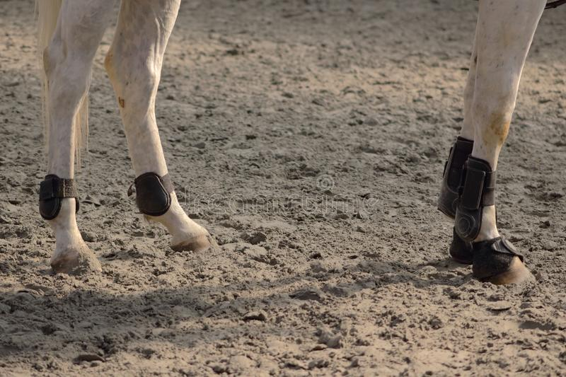 Leather protections for legs and balls of anterior and posterior horses set up with hoof bell royalty free stock image