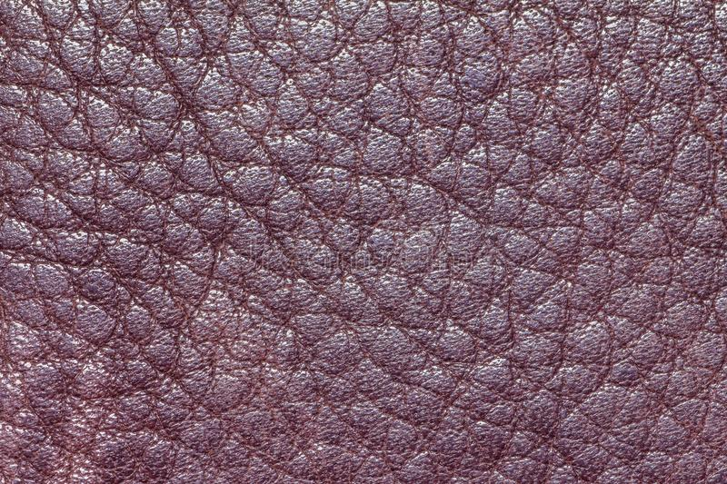 Leather texture or leather background for industry export. fashion business. furniture design and interior decoration idea concept. Design royalty free stock photo