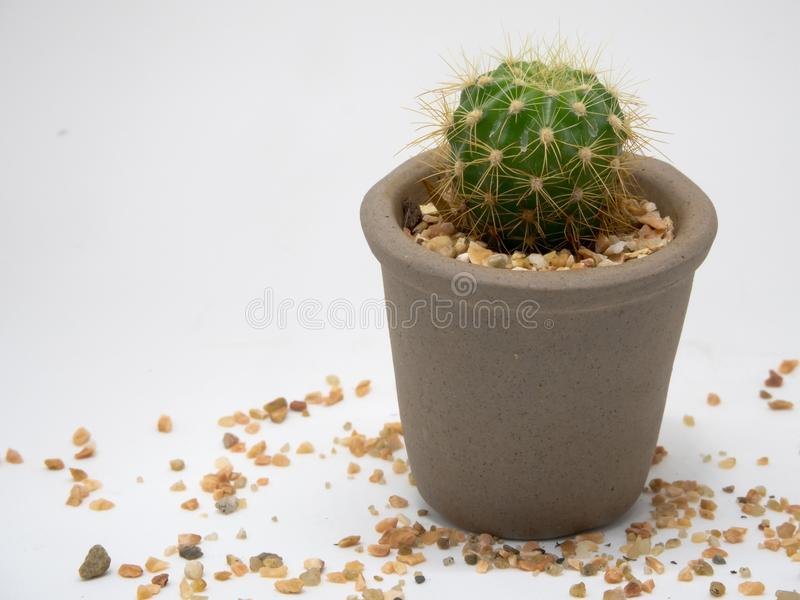 Leave the cactus alone royalty free stock photos