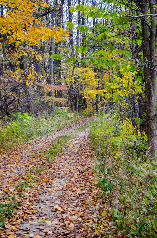 Leave covered road in a pretty fall woods stock photography