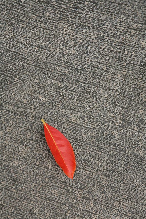 Leave on the ground. Outdoors photography of red autumn leave stock photo