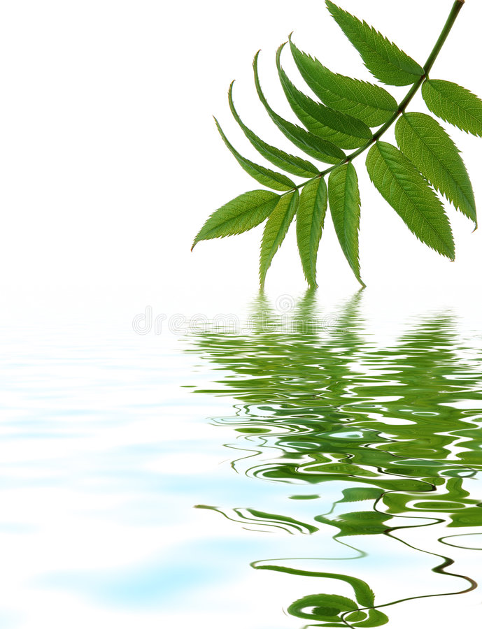 Leave reflection in water royalty free stock images