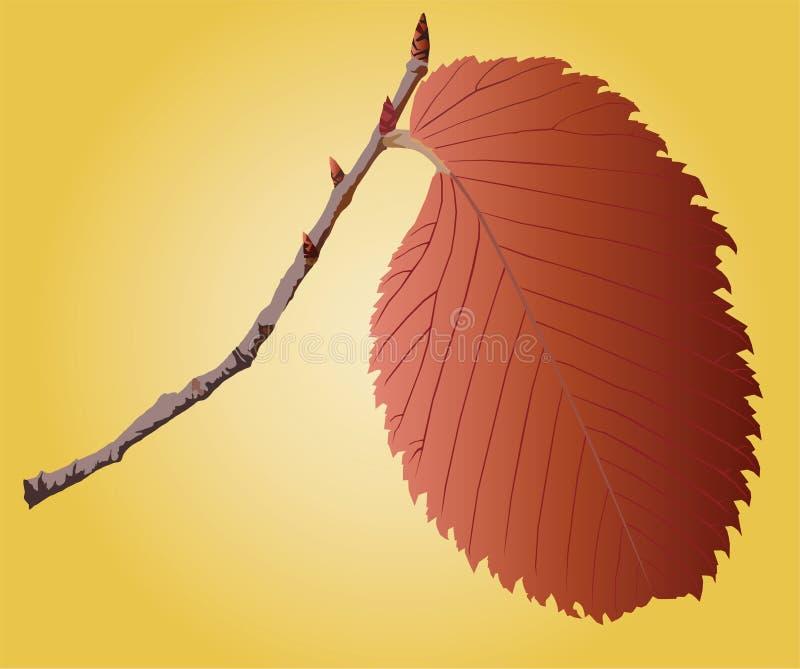 Download Leave on a sprig stock vector. Illustration of image - 14123642