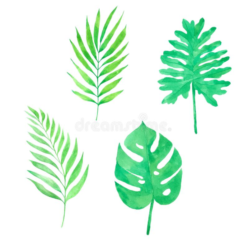 Leave watercolor collection Hand drawn painted for Greeting Card vector illustration