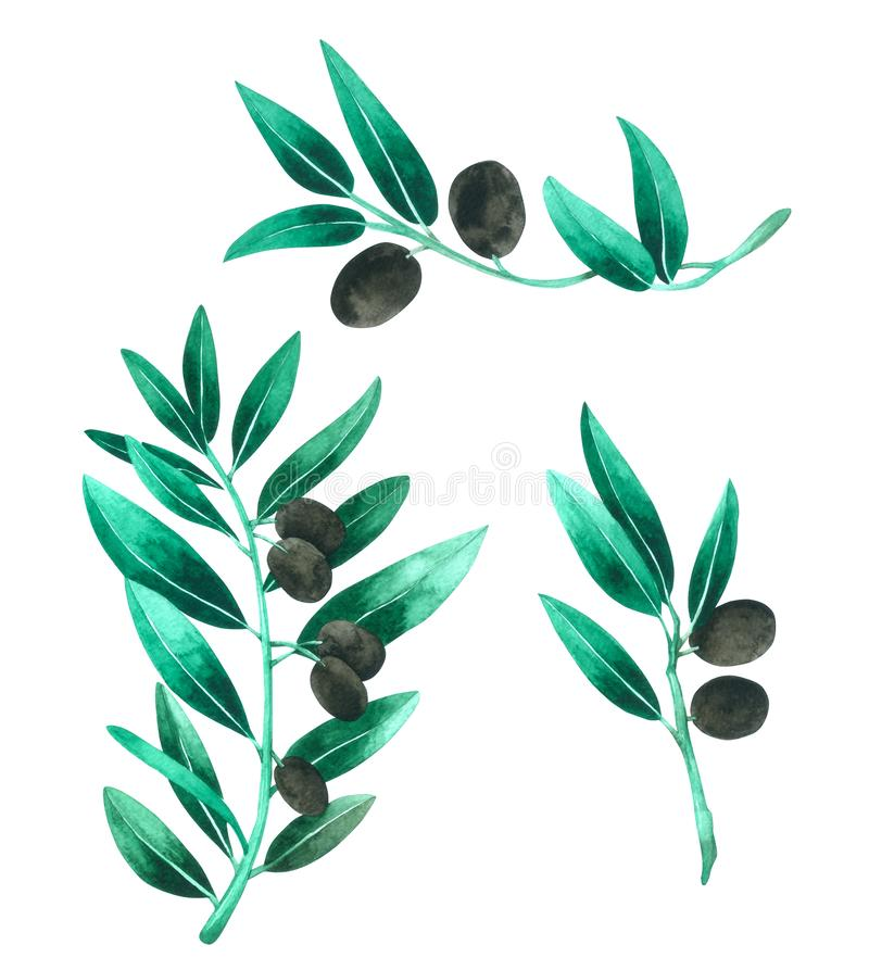 Leave watercolor isolated on white background , Hand drawn painted for Greeting Card ,Wallpaper ,Postcards, Product stock illustration