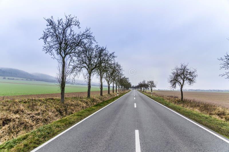 Leaveless-Bäume im inrural Bereich des Winters lizenzfreie stockbilder