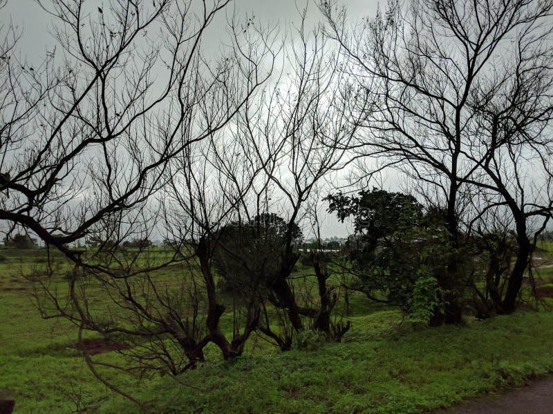 Leaveless-Bäume längsseits lizenzfreie stockfotos