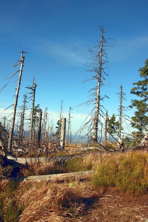 Leaveless se pare sur la traînée dans les montagnes images stock
