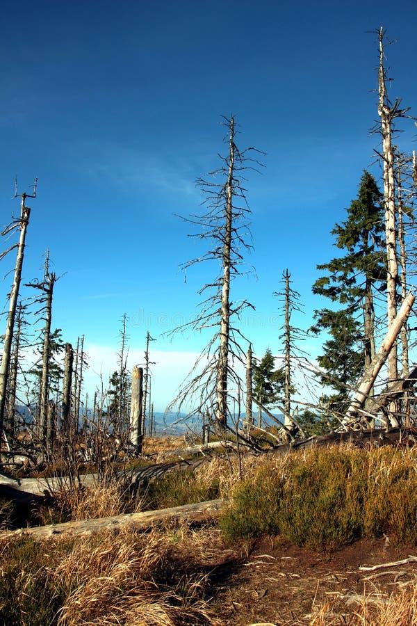 Leaveless se pare sur la traînée dans les montagnes photo libre de droits
