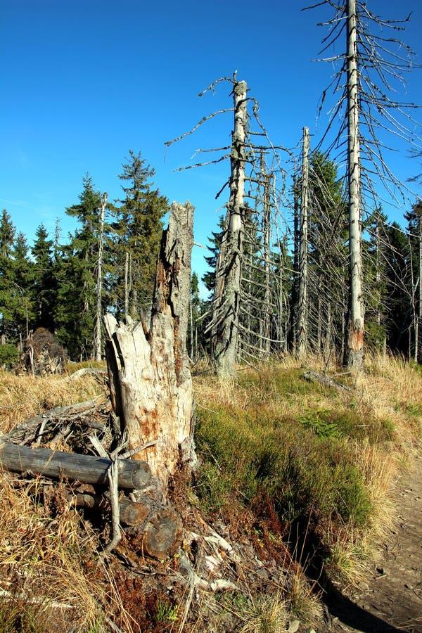Leaveless se pare sur la traînée dans les montagnes image libre de droits