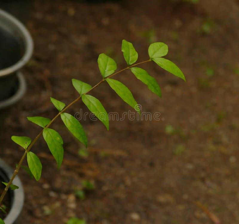 leaves ƒ zdjęcia stock