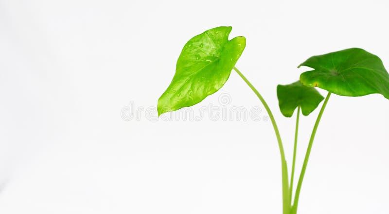 leaves arkivfoton