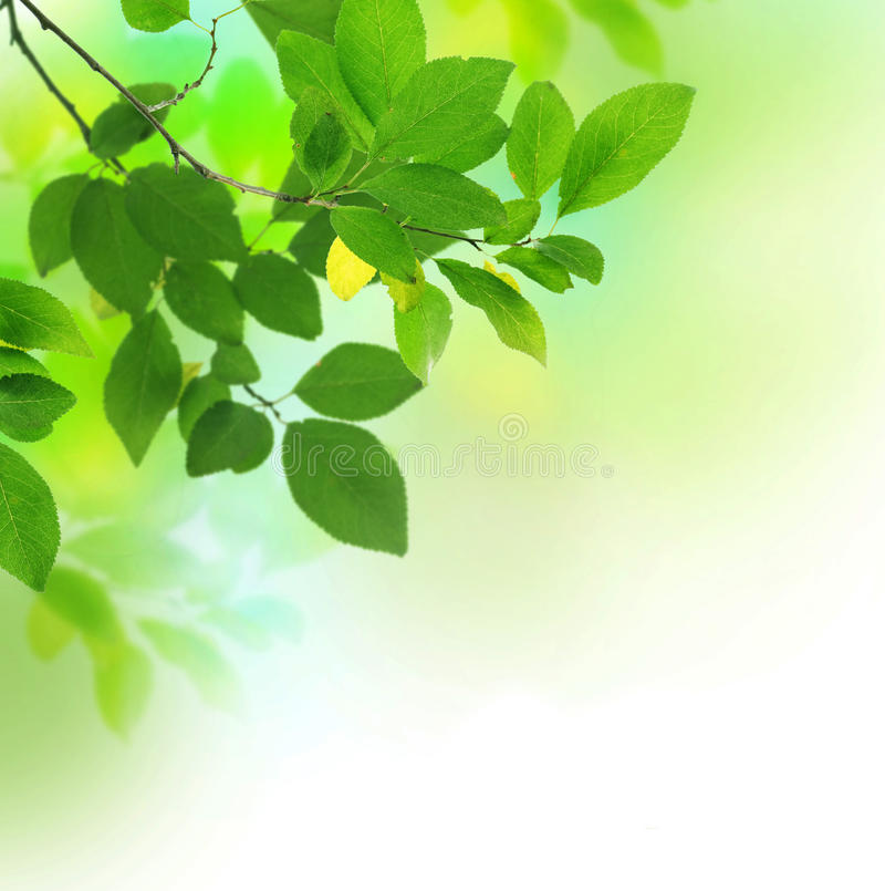 Leaves. Beautiful Fresh Green Leaves Border.Selective focus stock images