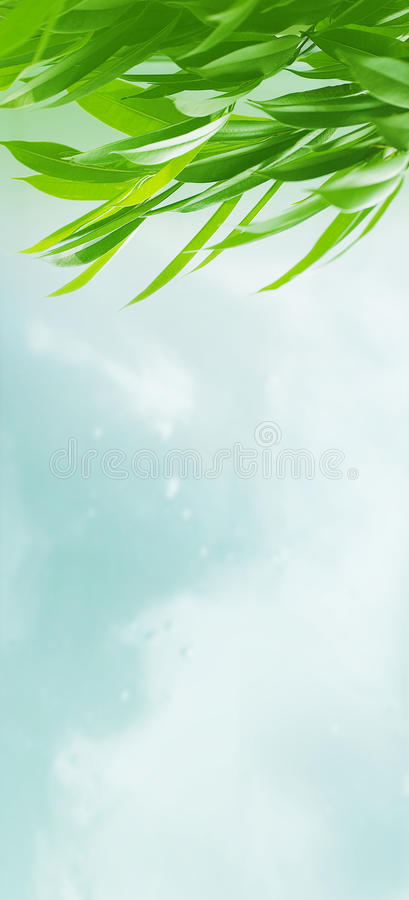 Download Leaves stock image. Image of outdoors, botanical, environment - 12375485