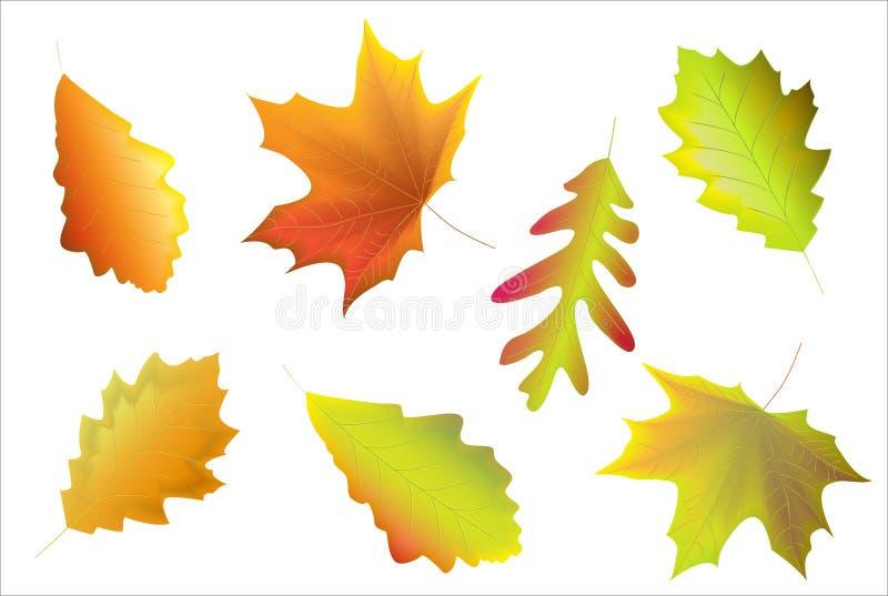 Download Leaves stock vector. Image of orange, season, plant, nature - 12792072