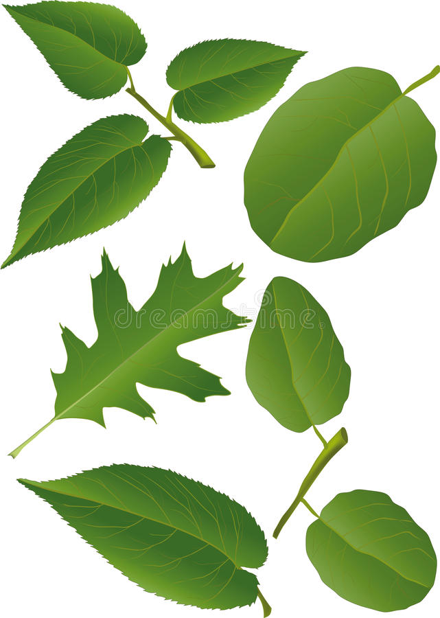 Download Leaves stock illustration. Image of painting, ornament - 13082205