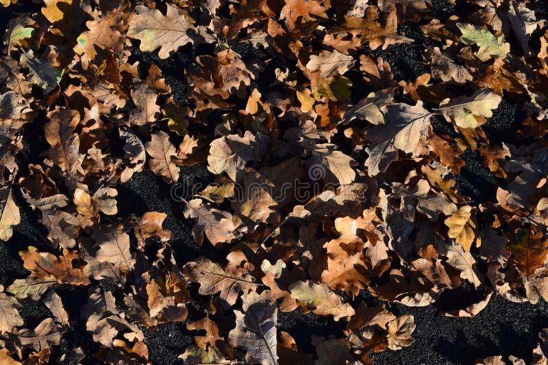Leaves2 foto de archivo libre de regalías