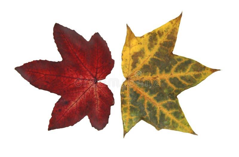 Download Leaves stock photo. Image of biological, leaf, decline - 166680