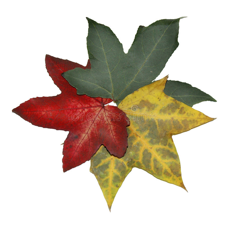 Leaves stock image