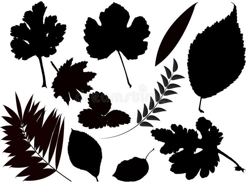 Leaves. Vector collection of various leaves on white background stock illustration