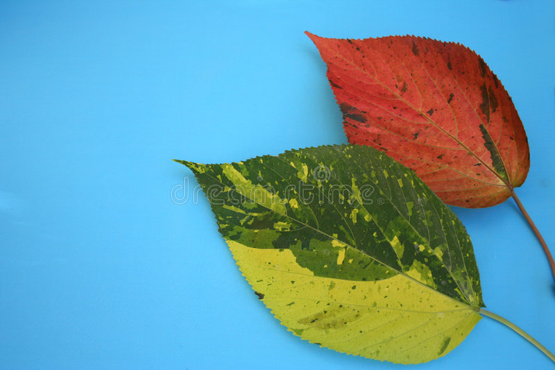 Download Leaves stock photo. Image of nature, nerved, autumn, plant - 189410