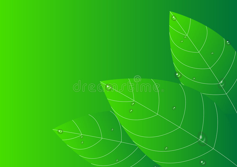 leaves stock illustrationer