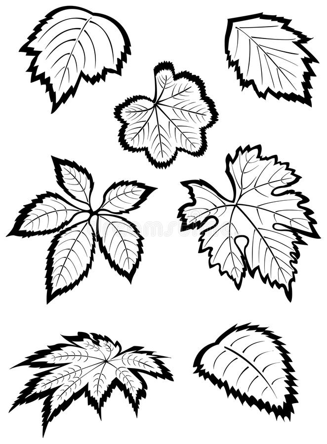 Download Leaves stock vector. Image of drawn, graphic, outline - 22481861
