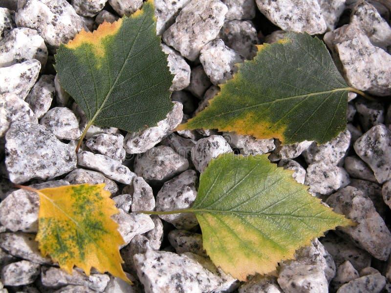 Download Leaves fotografering för bildbyråer. Bild av växt, trees - 236423