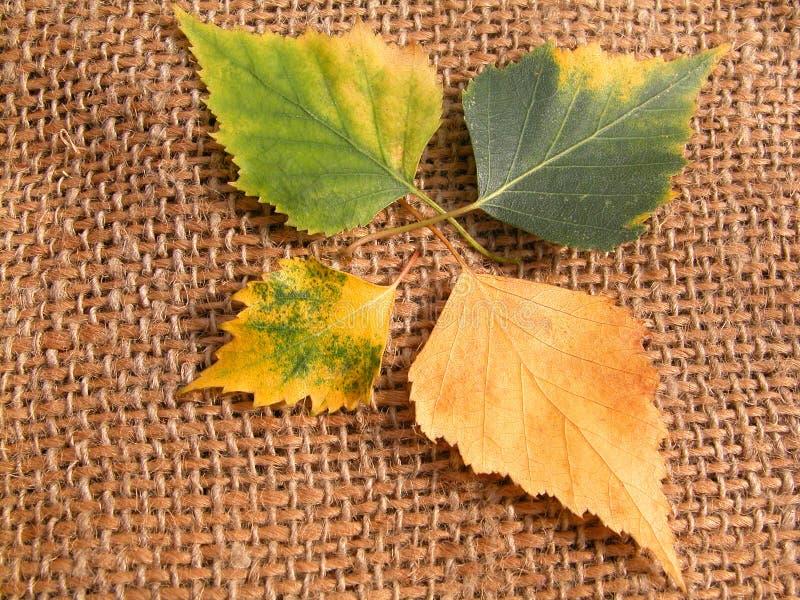 Download Leaves arkivfoto. Bild av tree, fallet, växter, växt, green - 236428