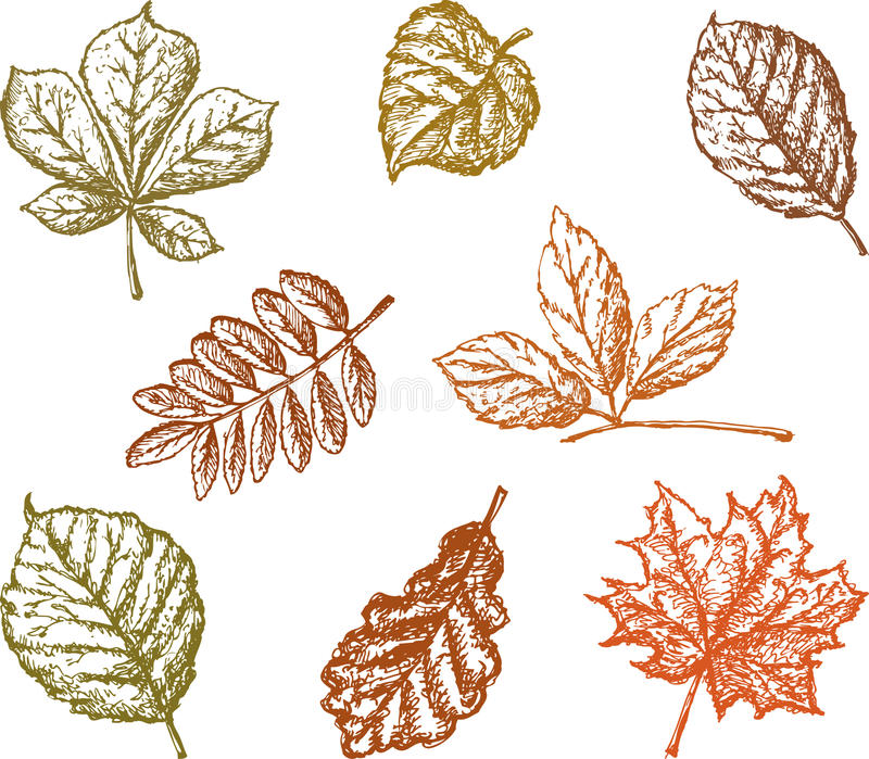 leaves vektor illustrationer