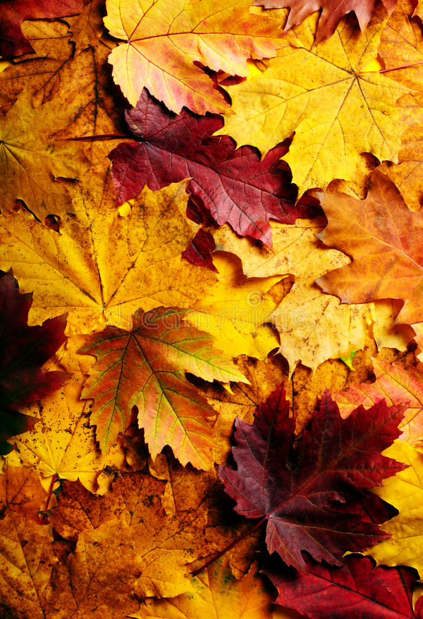 Download Leaves Stock Photos - Image: 27332843