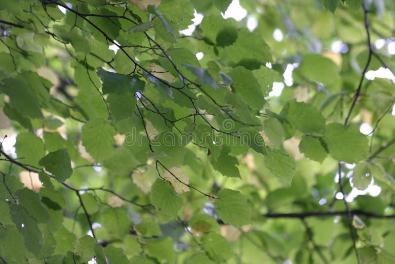 Download Leaves fotografering för bildbyråer. Bild av textur, green - 504807