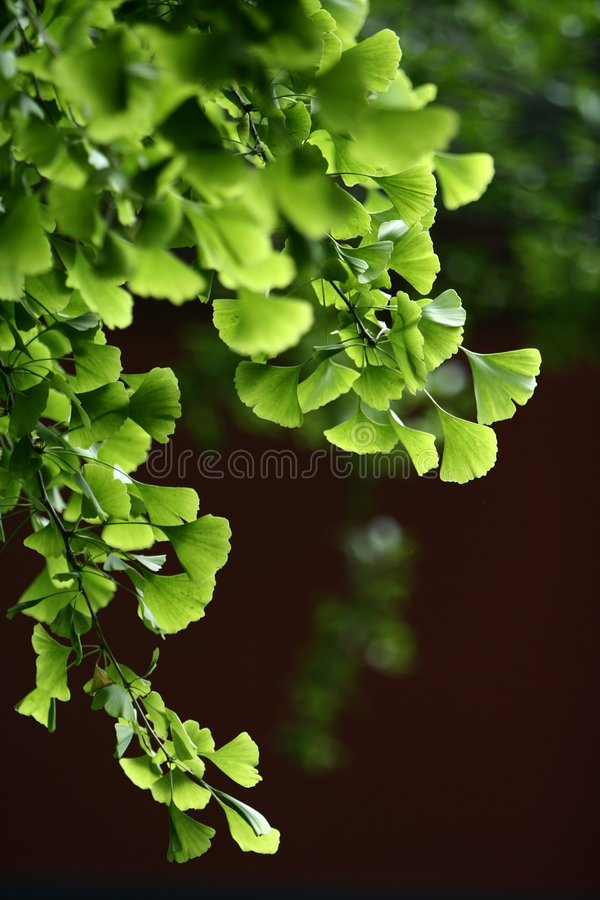 Free Leaves Stock Images - 5419424