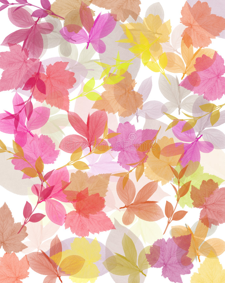 Leaves vector illustration