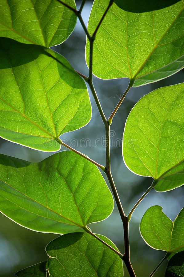 Download Leaves stock photo. Image of green, close, tree, leaves - 5802472