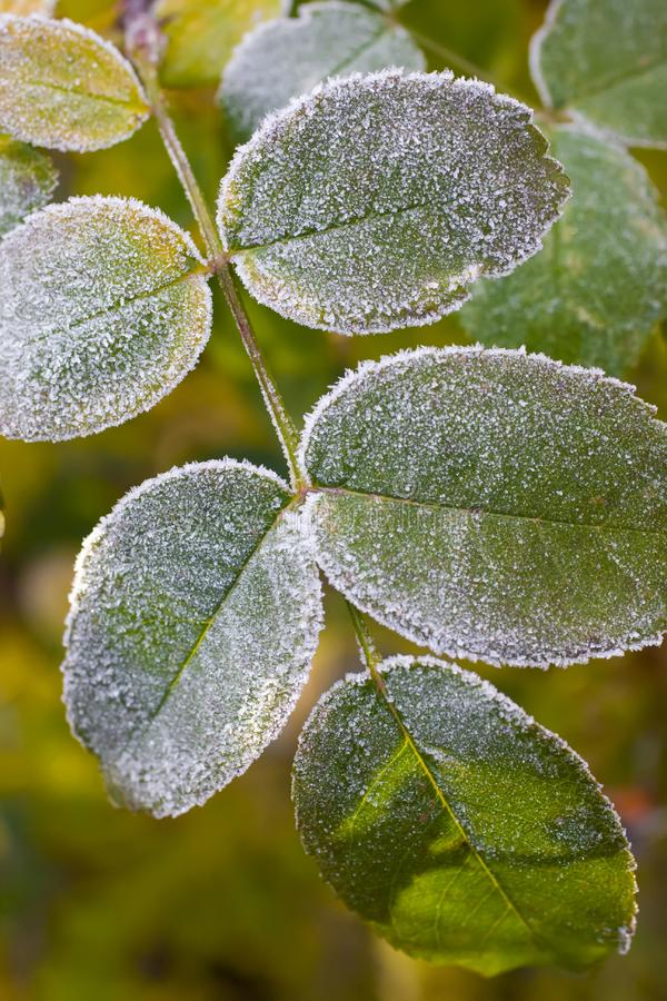 Download Leaves stock photo. Image of floral, cold, abstract, frozen - 8450274