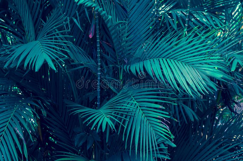 Leaves abstract palm tropical leaves colorful flower on dark tropical foliage nature background dark blue foliage nature royalty free stock photo