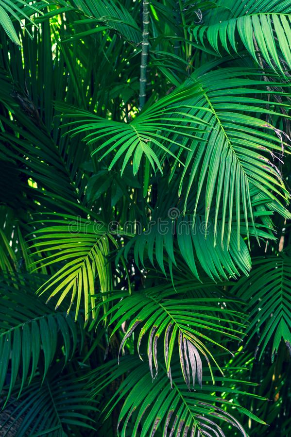 Leaves abstract palm tropical leaves colorful flower on dark tropical foliage nature background dark blue foliage nature stock photos