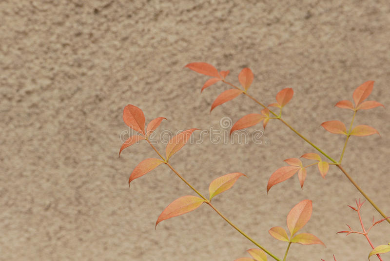 Leaves against the Wall royalty free stock photos
