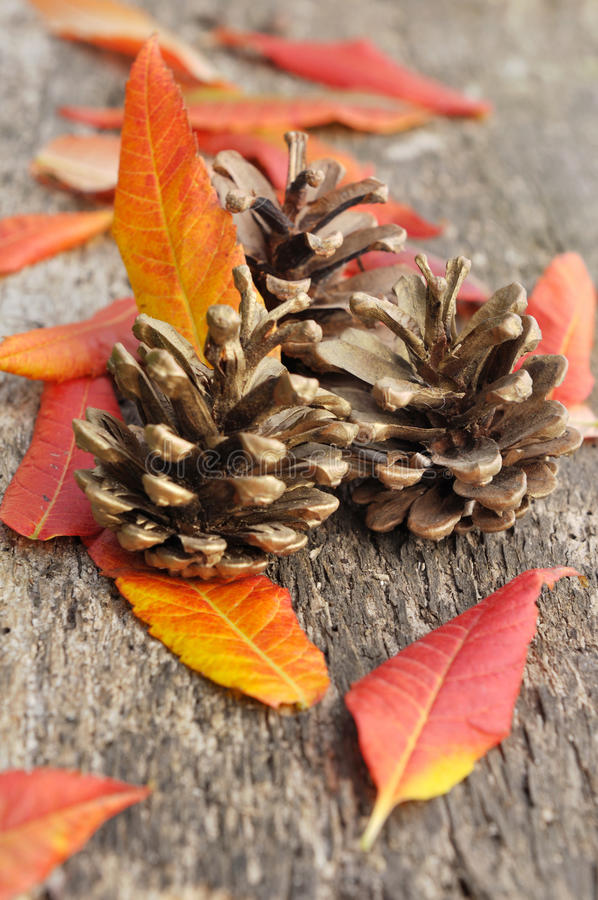 Free Leaves And Pine Cones Royalty Free Stock Photography - 45371457