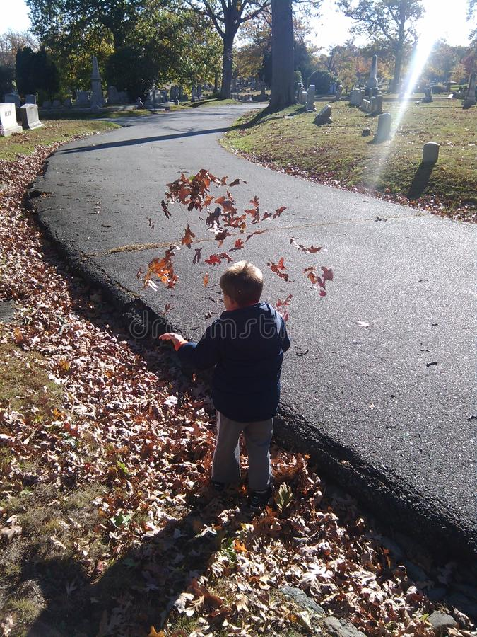 When leaves attack stock image