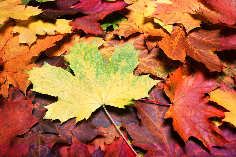 Leaves of autumn royalty free stock photography