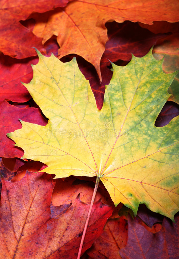 Leaves of autumn royalty free stock images