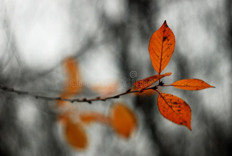 Leaves on the autumn tree stock image