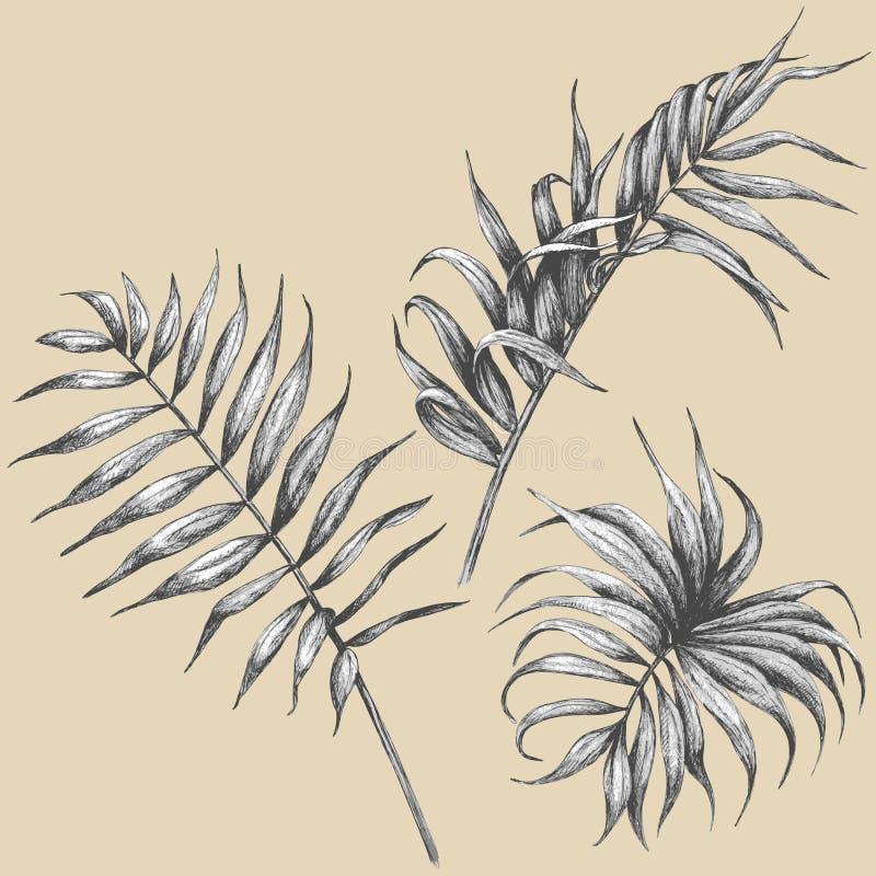 Leaves av den tropiska växten royaltyfri illustrationer