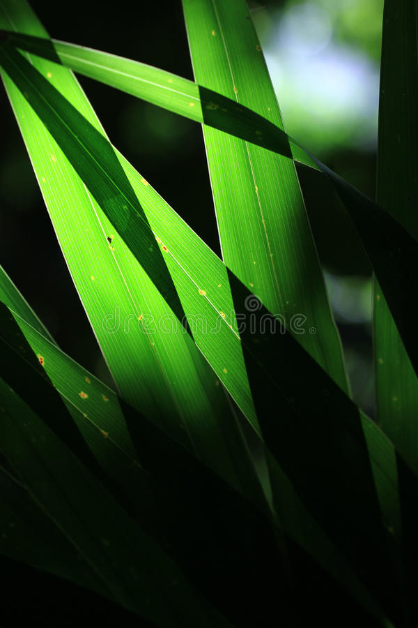 Leaves in back light royalty free stock photos