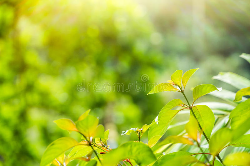 Leaves backdrop background stock images