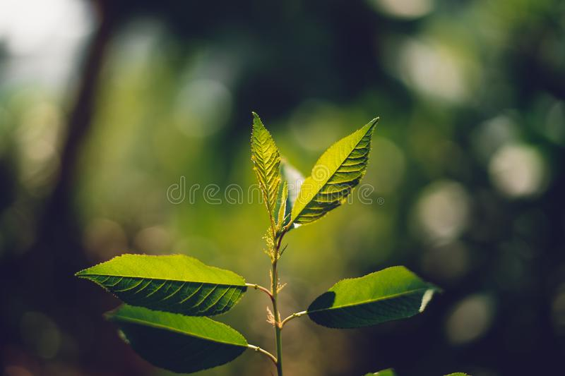 Leaves, background, leaves foliage Dark green stock images