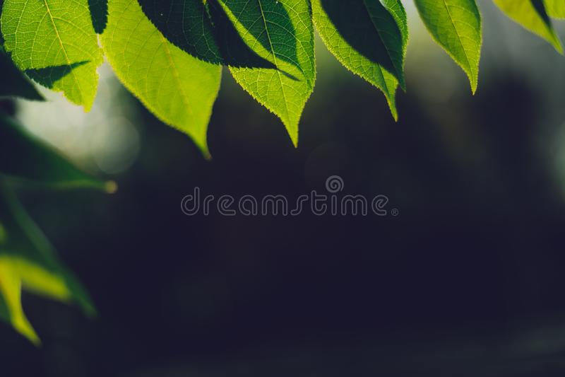 Leaves, background, leaves foliage Dark green royalty free stock photos