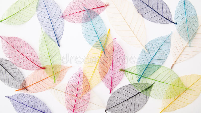 Leaves background in pretty pastel colors. A still life photograph of some pastel colours dried pressed leaves forming a casual light and airy back ground